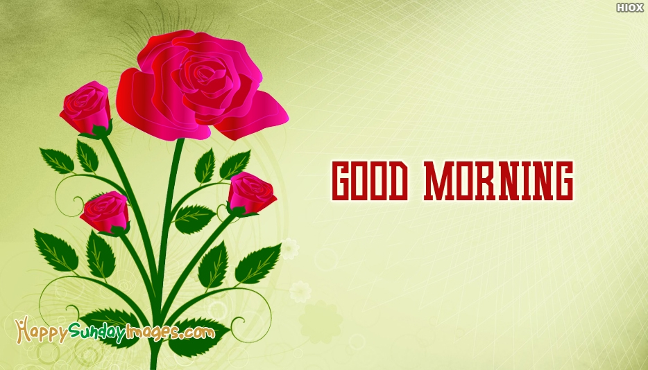 Good Morning Sunday Rose : Good morning happy sunday rose images many hd wallpaper