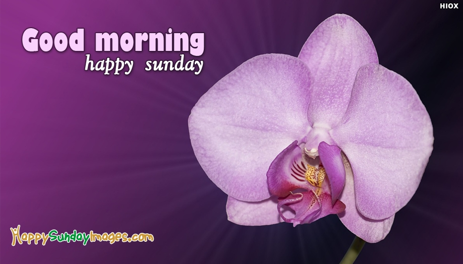 Good Morning With Happy Sunday - Happy Sunday Images for Friends