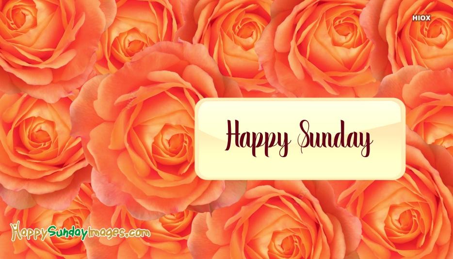 Happy Sunday Rose Flower