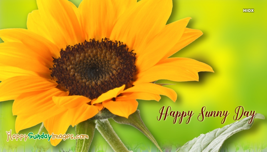 Happy Sunny Day Picture