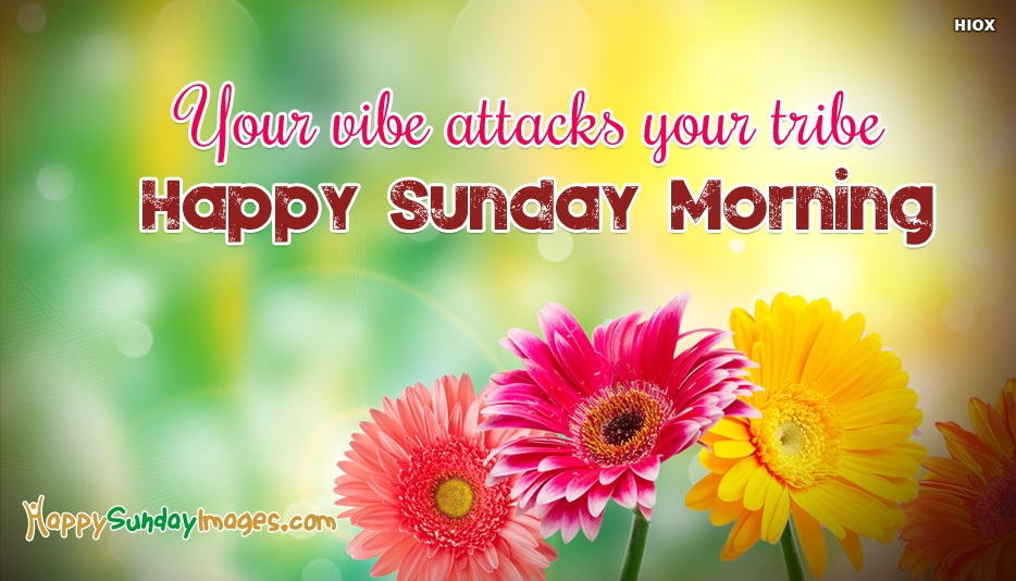 Your Vibe Attacks Your Tribe Happy Sunday Morning - Happy Sunday Images for Everyone